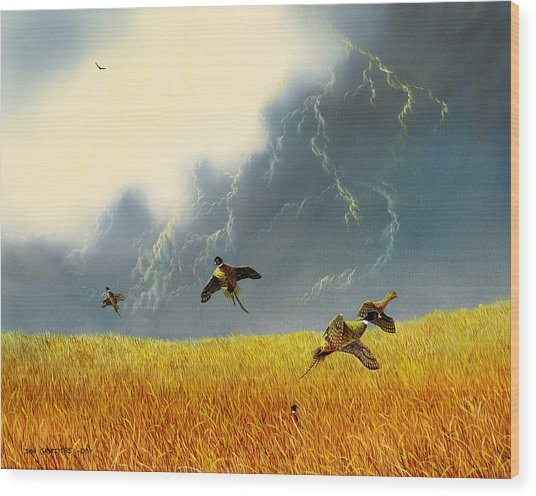 Pheasants On The Rise Wood Print by Don Griffiths