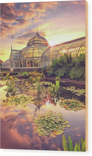 Lilys At Phipps  Wood Print