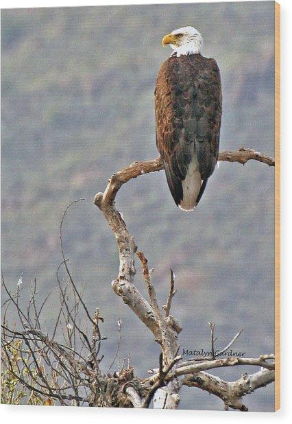 Phoenix Eagle Wood Print