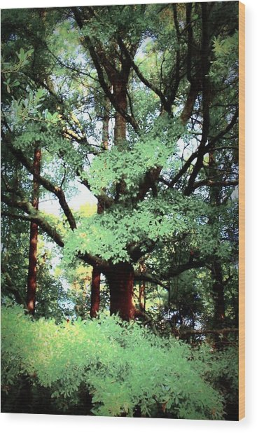 Photosynthesis Wood Print by Jill Tennison