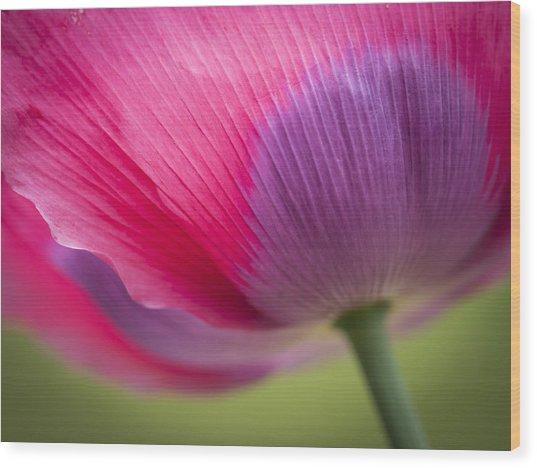 Poppy Close Up Wood Print