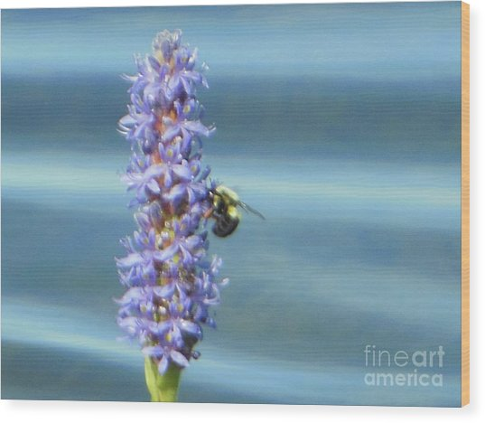 Pickerelweed Bumble Bee Wood Print