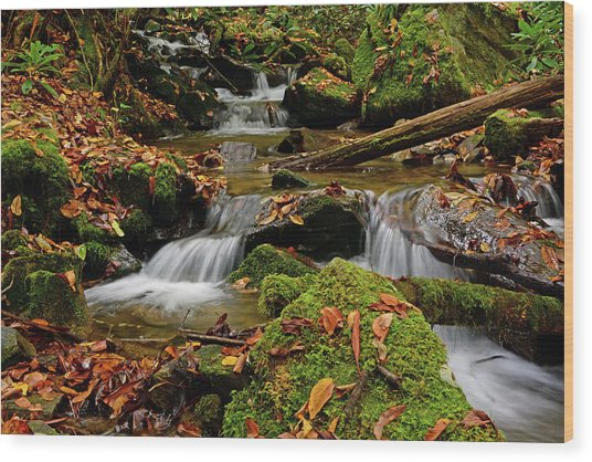 Pigeon Creek Cascades Wood Print