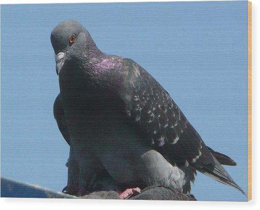 Pigeon On A Roof Wood Print by Lori Seaman