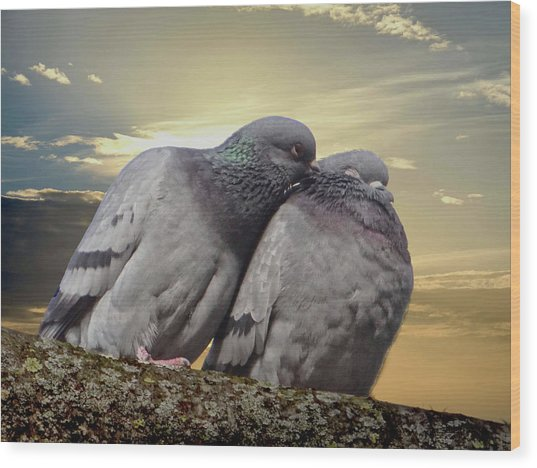 Pigeons In Love, Smooching On A Branch At Sunset Wood Print