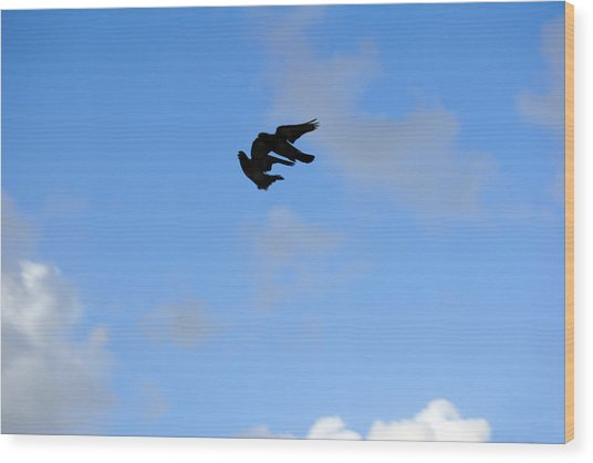 Pigeons Shadow Wood Print