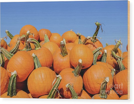Pile Of Pumpkins Wood Print