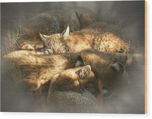 Pile Of Sleeping Bobcats Wood Print