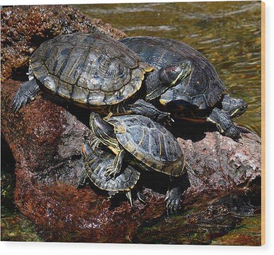 Pile Of Sliders - Turtles Wood Print