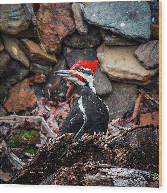 Pileated Pete Wood Print
