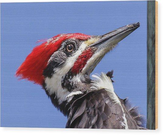 Pileated Woodpecker Headshot Wood Print