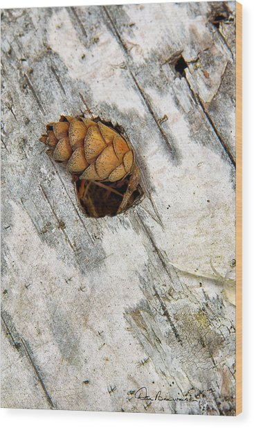 Pine Cone On Birch Bark 8021 Wood Print