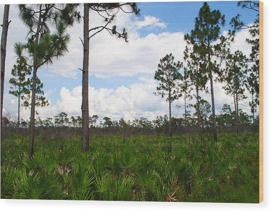 Pine Flatwoods Wood Print by Steven Scott