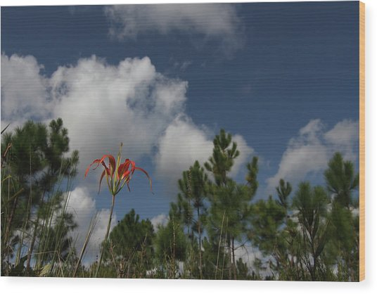 Pine Lily And Pines Wood Print