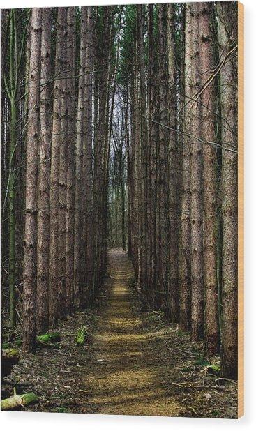 Pine Path  Wood Print
