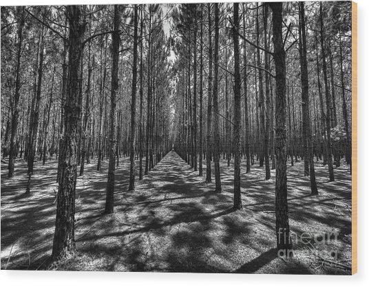 Pine Plantation Wide Wood Print