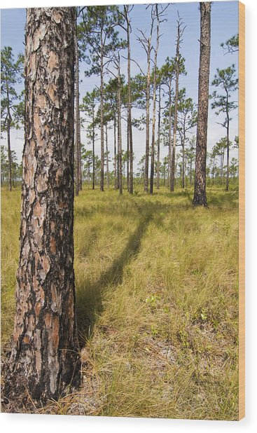 Pine Savanna II Wood Print