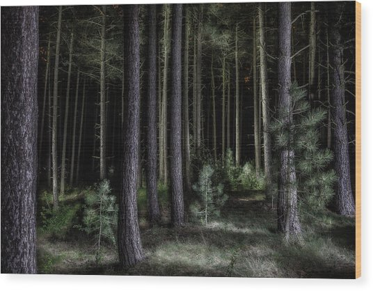 Pine Tree Forest At Night Wood Print