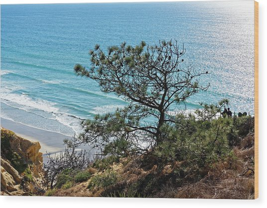 Pine Tree On Coast Wood Print