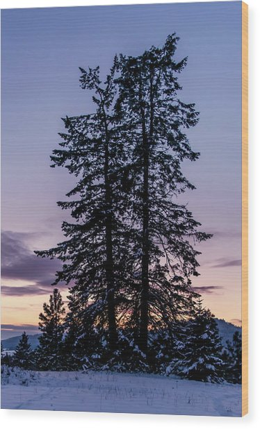 Pine Tree Silhouette    Wood Print