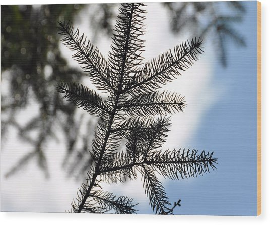 Pine View Wood Print by JAMART Photography