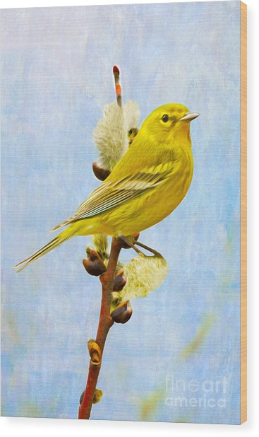 Pine Warbler On Willow Catkin Wood Print