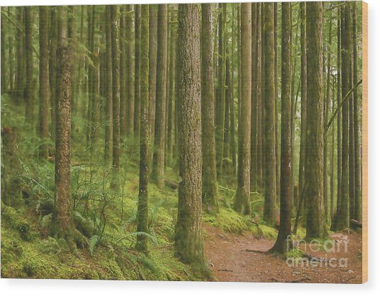 Pines Ferns And Moss Wood Print
