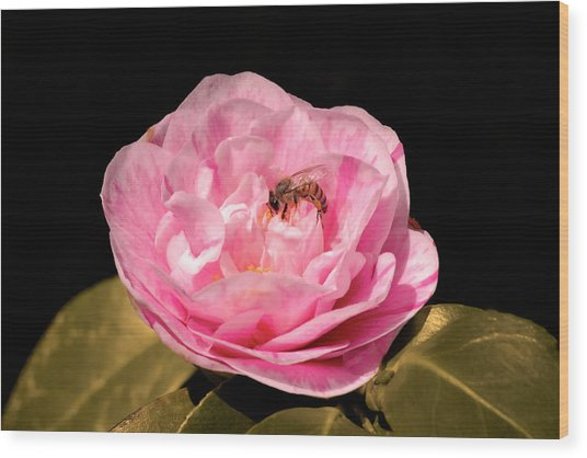 Pink And Bee Wood Print