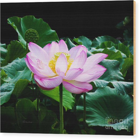 Pink And Green Floral Garden Ballet 11u Lotus Bloom Wood Print