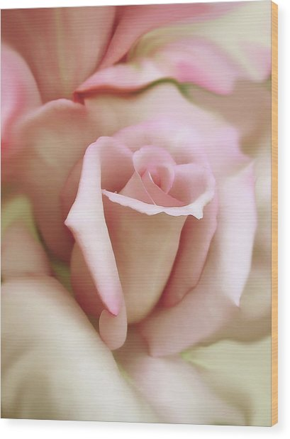 Pink And Ivory Rose Portrait Wood Print