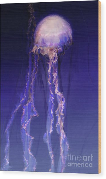 Pink And Purple Jellyfish Wood Print