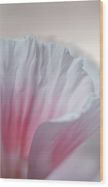 Pink And White Wood Print by Robert Ullmann