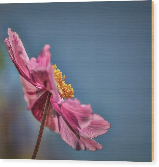Wood Print featuring the photograph Pink And Yellow Profile #h8 by Leif Sohlman