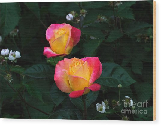 Pink And Yellow Rose With Raspberrys Wood Print