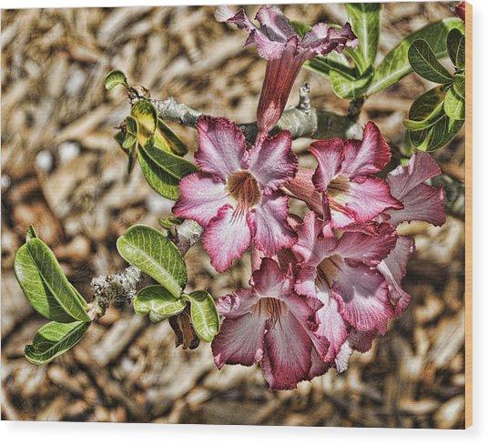 Pink Azalea IIi Wood Print