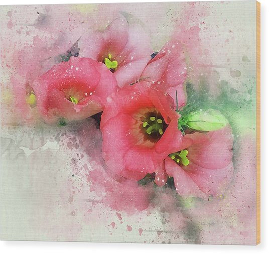Pink Babies A Wood Print