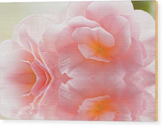 Pink Begonia Reflection 1 Macro Wood Print