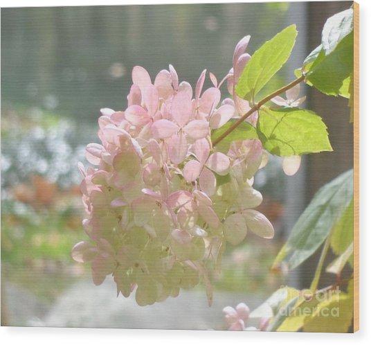 Pink Bloom In Sun Wood Print