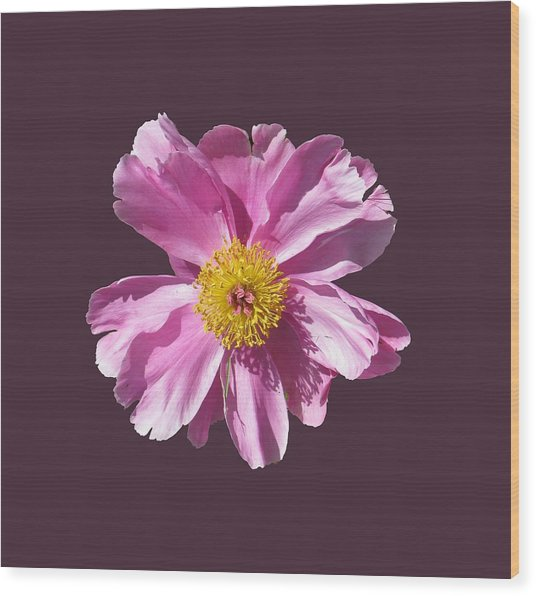 Pink Burst Wood Print