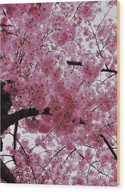 Pink Canopy Wood Print