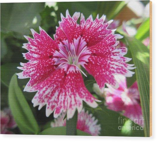 Pink Carnation  Wood Print
