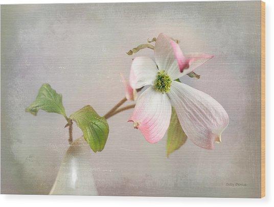 Pink Cornus Kousa Dogwood Blossom Wood Print