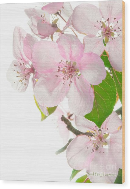 Pink Crabapple Blissoms Wood Print
