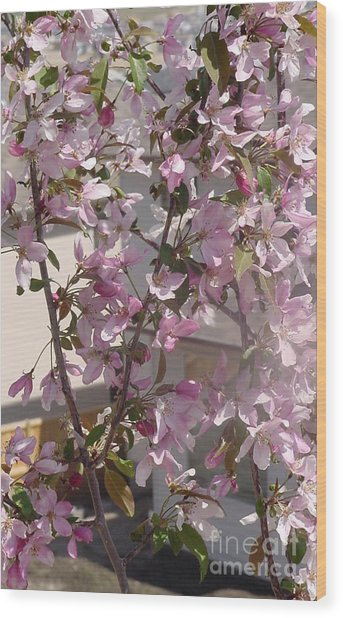 Pink Crabapple Branch Wood Print