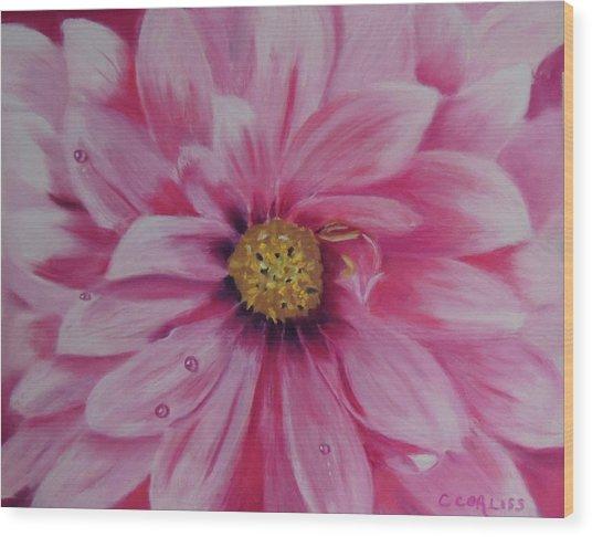 Pink Dahlia I Wood Print