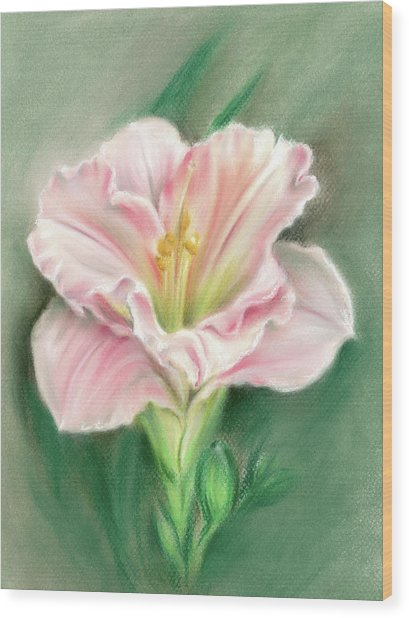 Pink Daylily And Green Buds Wood Print