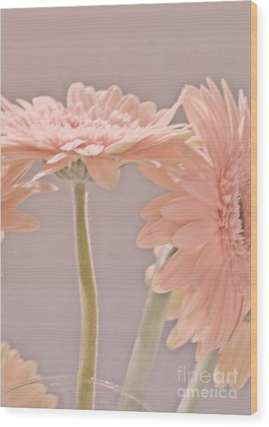 Pink Dreams Wood Print