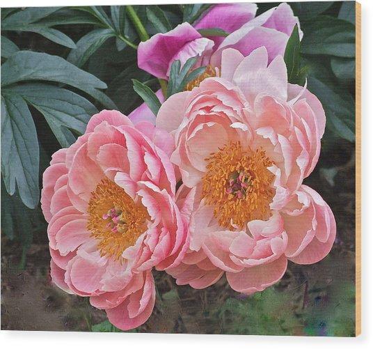 Pink Duo Peony Wood Print