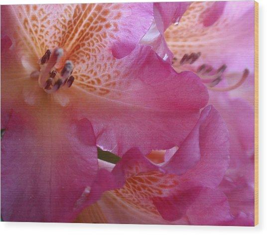 Pink Extravaganza Wood Print by Valia Bradshaw