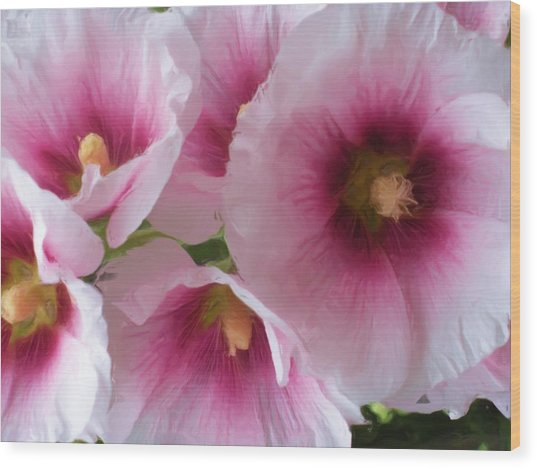 Pink-faced Hollyhocks Wood Print